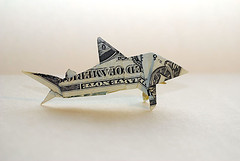 dollar bill shark