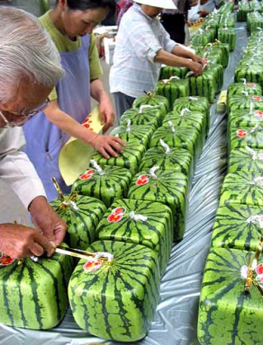 the square watermelon