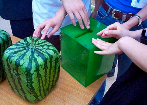 Lessons of the square watermelon financial hackfinancial - Square watermelons how and why ...